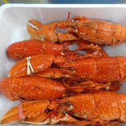 homard cuit entier vendu en caisse